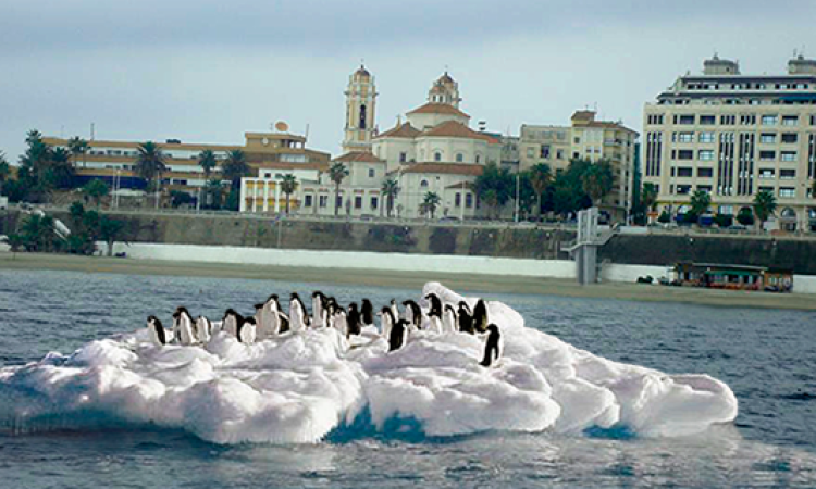 La ola de frío arrastra un iceberg con pingüinos a la Ribera
